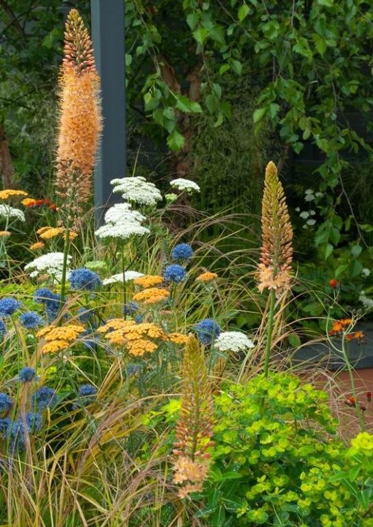 Végétal ambiance jardin vivace