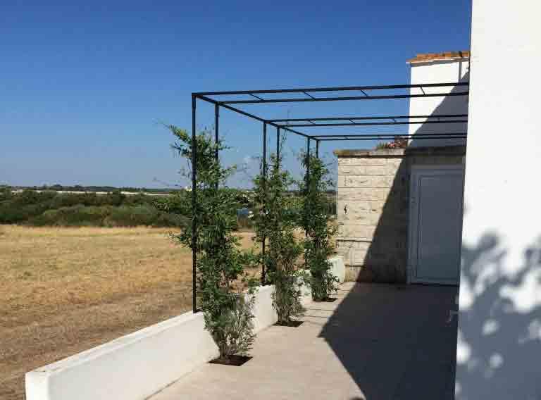 installation de pergola sur mesure plante grimpante